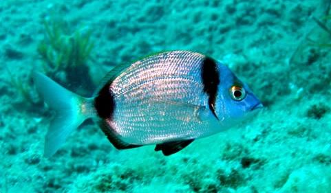 Sardinie duiken